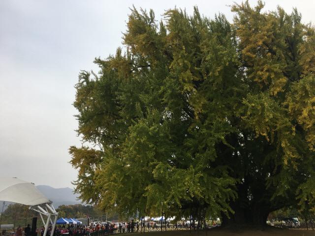 [두유바이크]98낙엽 휘날리다, 트라이엄프 '스킬 업 투어'