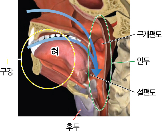 Larynx cancer above 50 and tons below 40