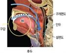 50대 이상 후두암 줄고 40대 이하 편도암 증가세