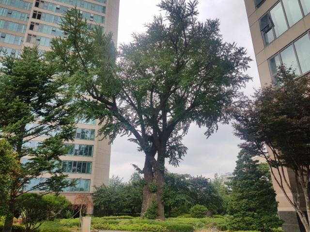 [박윤선의 부동산 TMI] 4노후 단지에 있던 나무들 다 어디로 갔을까?