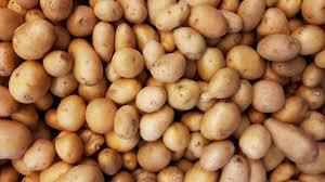 [오늘의 경제소사] 1586년 영국에 감자 전래