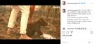 """샘 해밍턴, 화마에 휩싸인 호주 '코알라' 영상에 """"눈물난다, 미치겠네"""""""