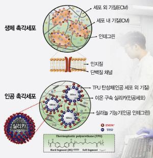 [사이언스]사람처럼 자극 감지 '전자 피부'…웨어러블 혁신에 기여