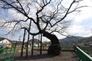 [오색인문학] 나무에 걸린 홍의장군의 북 나라를 구하다