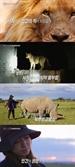 '휴머니멀' 류승룡이 찾은 갈등의 현장, 사자 vs 인간..생존을 건 경쟁