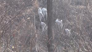 'TV 동물농장' 한 마을을 감도는 살벌한 공기, 다섯 들개들의 운명은?