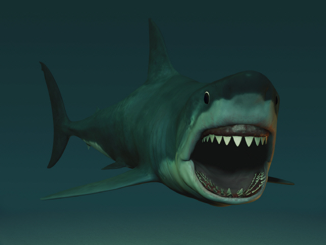 상어 공격받자 코에 주먹날려 쫓아낸 서퍼 화제