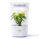 [토요워치] LED전등서 스마트화분까지...식물생장 돕는 아이템도 인기