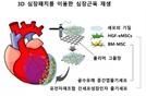 '복합 줄기세포 3D패치'로 손상된 심장근육 재생 성공