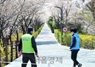 임시 폐쇄된 양재천 벚꽃길