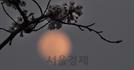 봄의 보름달 '핑크 슈퍼문'
