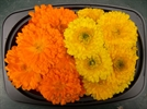 농진청, 봄철 식용꽃 20여 품목 섭취 가능… 폴리페놀 등 풍부해 면역력 강화