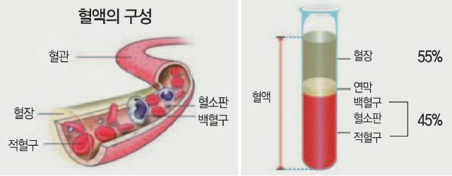 '혈장+스테로이드 치료' 병행, 코로나19 바이러스·염증반응 모두 잡아