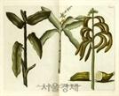 [오늘의 경제소사] 17세기 런던의 바나나