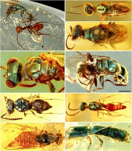 9,900만년前 곤충 色은…