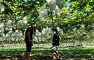 [글로벌 부동산 톡톡]농업까지 진출하는 일본 부동산 회사들