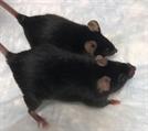 우주 근손실 막는 '마이티 마우스' 실험 성공