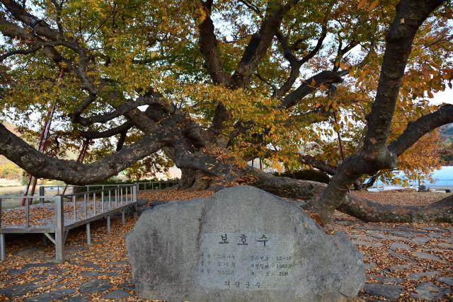 [오색인문학] 560년 시공간 기억담은 '나무 섬'