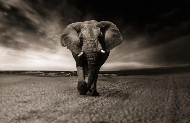 코끼리는 왜 암에 걸리지 않을까?