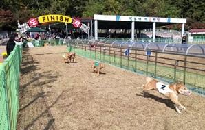 전남 '진도개테마파크'에 '동물학대' 비판…청와대 청원도