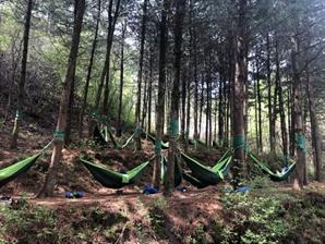 국립산림치유원, 올봄 힐링 여행 책임진다