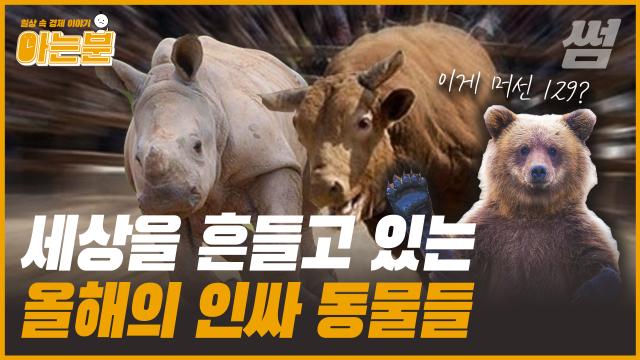 코뿔소·백조·황소·곰…경제 기사 속 동물들의 의미, 아는 분?