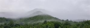 [休]'느림'을 제대로 즐기는 법…슬로시티 제천 측백나무숲으로 봄맞이 여행