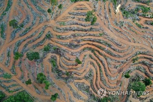 '17 년 만에 프랑스만큼 열대 우림이 파괴 …
