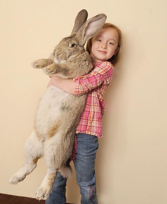 129cm 세계 최장신 토끼 실종…'매우 슬픈 날, 제발 돌려주세요'