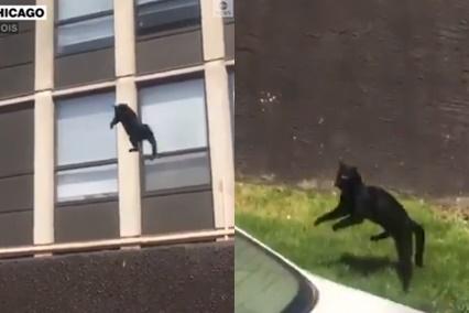[영상]건물 화재에…5층에서 뛰어내린 고양이 '무사'