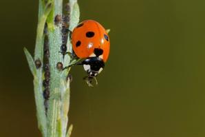 새 먹거리로 뜬 '곤충'…작년 시장규모 414억