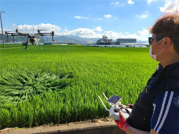 부산농업기술센터 청년농업인 드론영농단, 돌발병해충 방제에 나서