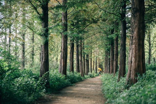 [休]숨겨진 숲길…도심속 뱃길…금단의 물길…길에서 마주친 夏루