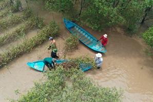 SK이노베이션, 올해도 베트남서 '맹그로브 숲' 복원 사업 이어간다