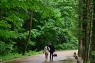 [休]전나무로 숲며들다