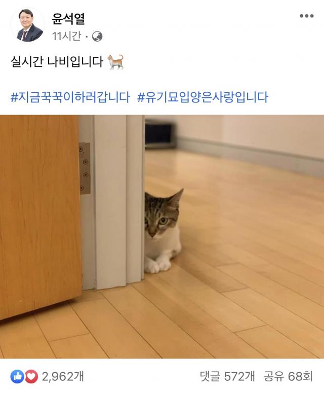 '나비 집사' 윤석열 '지금 꾹꾹이 하러 갑니다'…반려묘 사진 공개