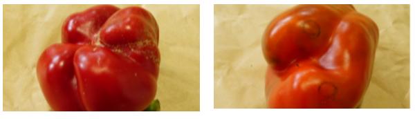 [지구용]못생겨서 버려진다고요?…못난이 채소 정기구독 서비스 '어글리어스
