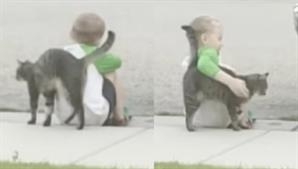 """[영상] """"슬퍼하지마"""" 부비부비…다섯살 꼬마 위로해준 길고양이"""