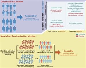 성대 연구팀, 비만과 심혈관 질환의 복합 관계 규명
