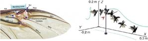 [이달의 과학기술인상]박훈철  건국대 교수, 풍뎅이 날개 닮은 차세대 비행로봇 개발