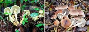 충북서 버섯 채취중 사고…일주일새 3명 숨져